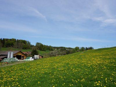 Höfli-Farm